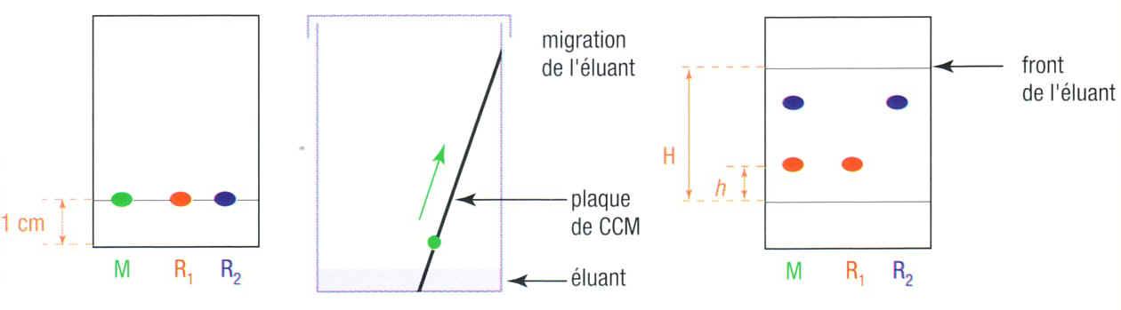 Sciences physiques ter s - Animation chromatographie sur couche mince ...